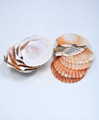 Mini Scallop Baking Shell 12 Pack 2 Inch